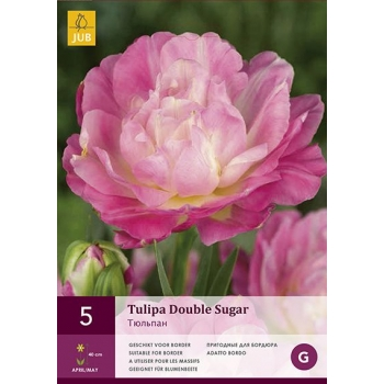 Tulp Double Sugar 5tk