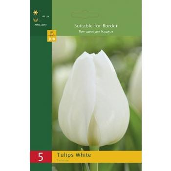 Tulp Triumph White 5tk
