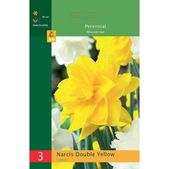 Nartsiss Double Yellow 3tk