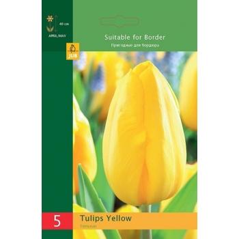 Tulp Triumph kollane 5tk