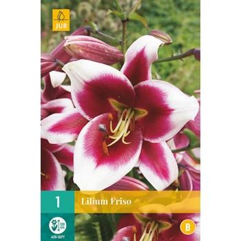 JUB Liilia Oriental -trumpet Friso 16/18