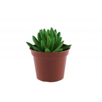 Kunstlill Sukulent 13cm potis roheline