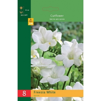 Freesia White 8tk