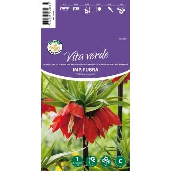 Püvilill Fritillaria Rubra C