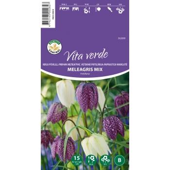 Püvilill Fritillaria Meleagris C 15tk