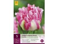 Tulp Crispion Sweet 5tk