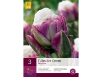 Tulp Ice Cream 3tk