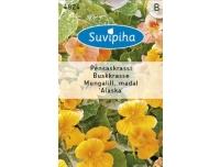 Suvipiha Mungalill Alaska madal 3g B