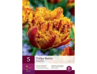 Tulp Bastia 5tk