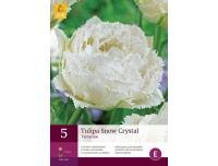 Tulp Snow Crystal 5tk
