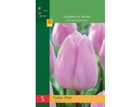 Tulp Triumph roosa 5tk