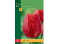 Tulp Triumph punane 5tk