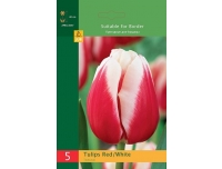 Tulp Triumph Red/White 5tk