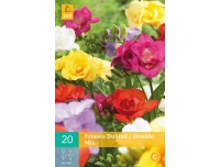 JUB Freesia Double Mix 5/+ 20tk