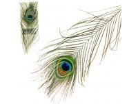 Dekoratiivsulg Paabulind 30cm 3tk