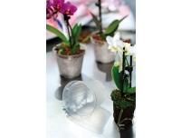 Orhideepott plast Ebert 10cm h.8cm