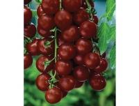 Lucia Tomat Black Cherry 0,2gr