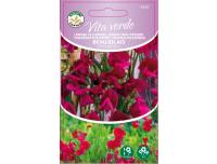 Lõhnav lillhernes Vita Verde Beaujola 2g