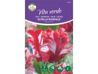 Tulp Estella Rijnveld 7tk C