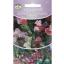 Lõhnav lillhernes Vita Verde Spencer 2g